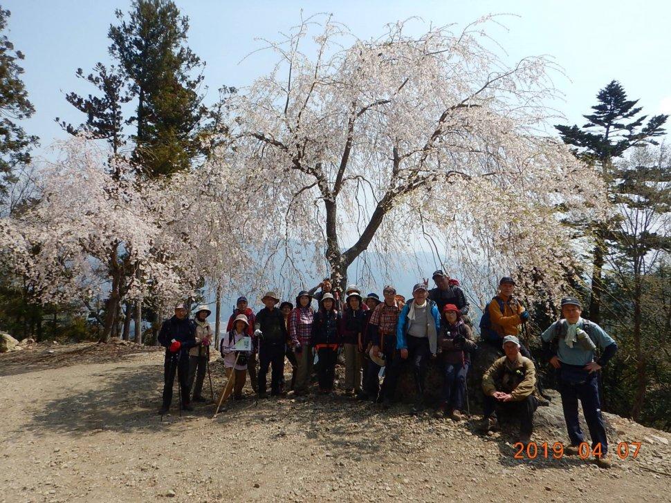桜の下写真