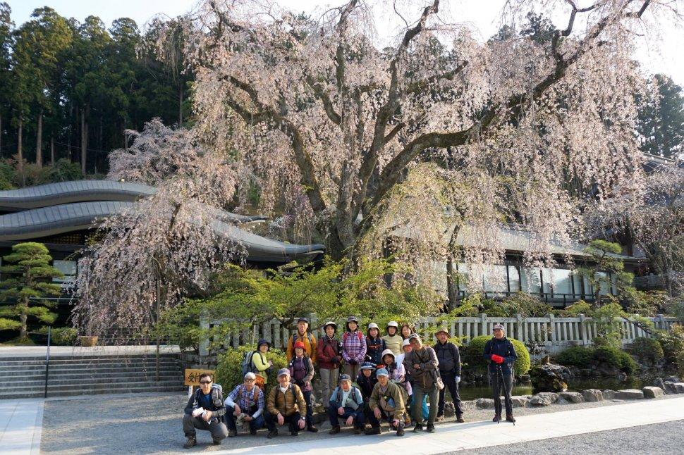桜集合写真